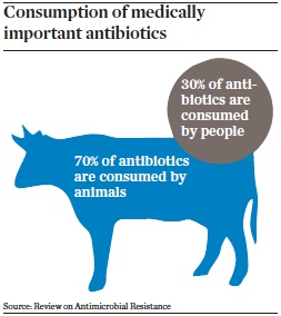 consumption of medically important antibiotics