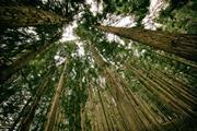 PFZW takes stake in green bonds