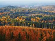 Forests in Finland