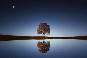 Reflection ESG tree