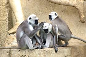 "Cass Business School's ""monkeys"" beat the market cap index"