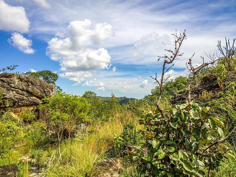 cerrado vegetation brazil savanna deforestation esg